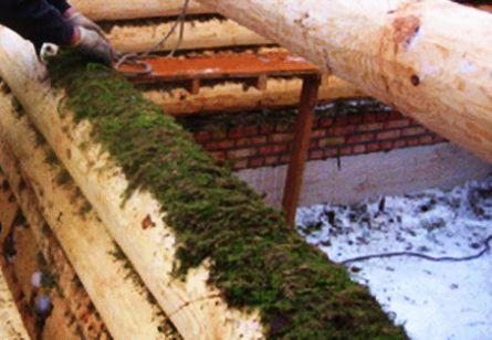 Как заготовить и уложить мох для сруба?