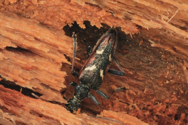 поражение дерева насекомыми