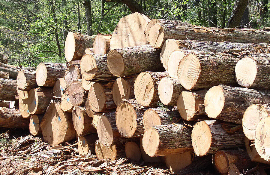 дерево живой материал
