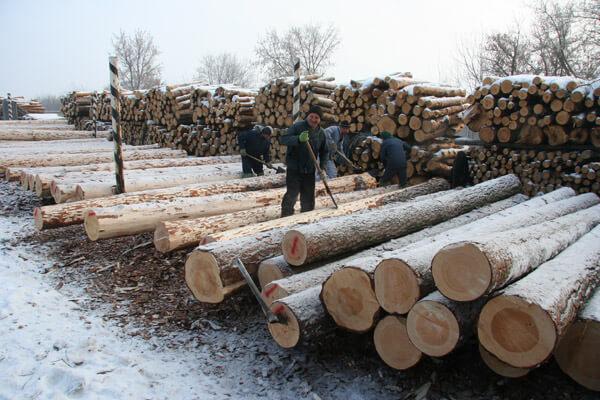 зимний деревянный лес