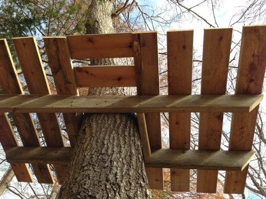Какое дерево подойдет для строительства домика?