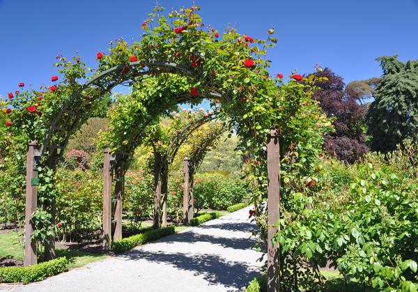 Группа садовых арок