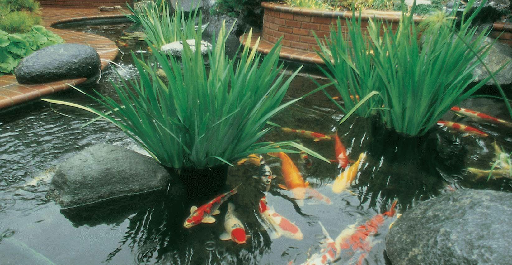 Рыбы в декоративном пруду